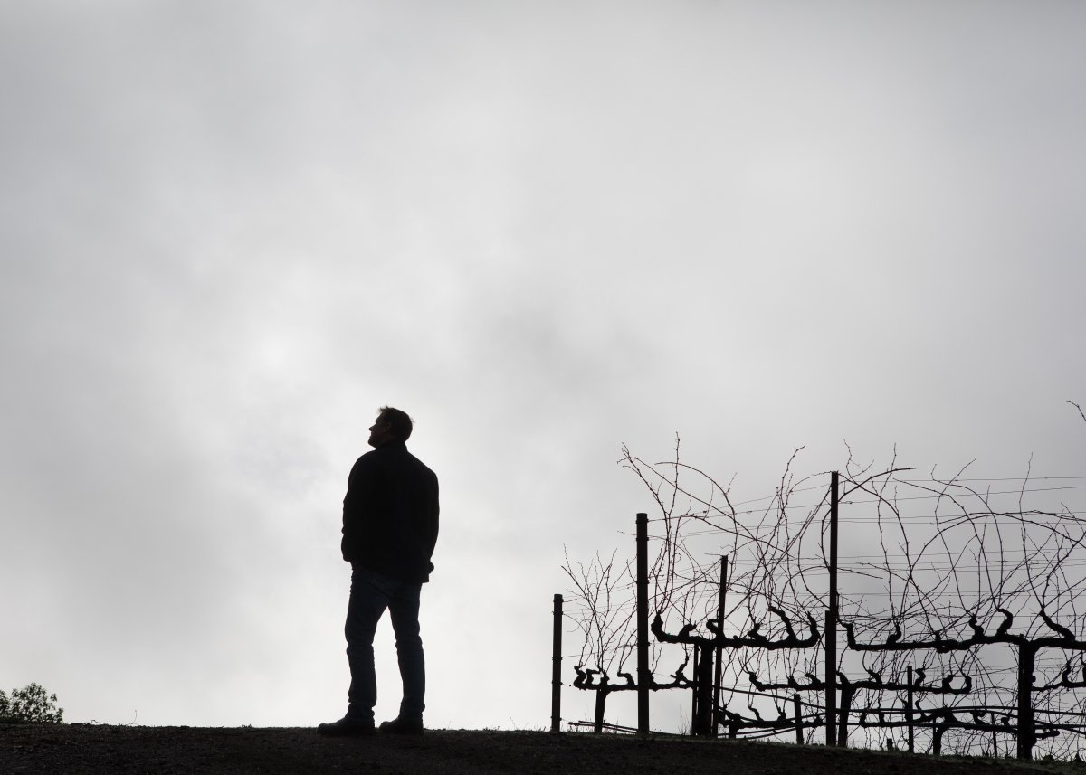 Silhouette of a winemaker in the vineyard