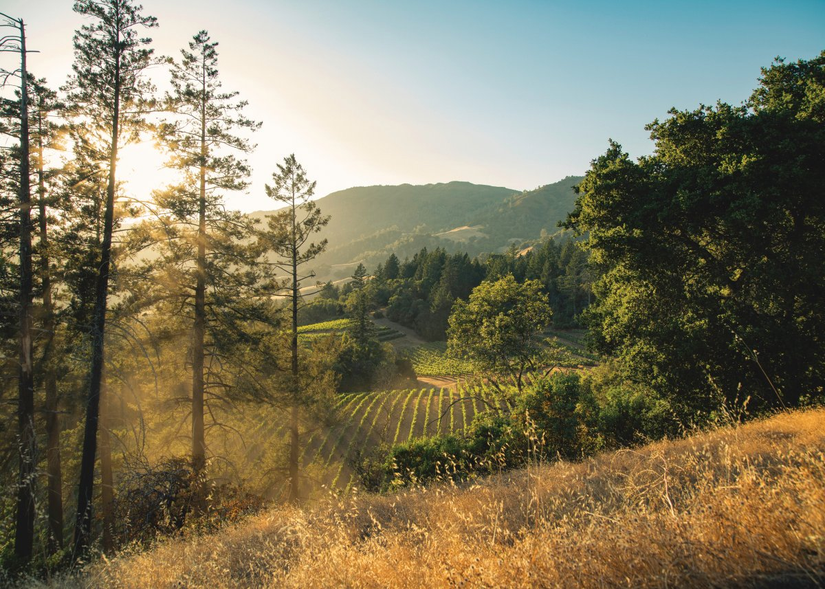 Overlooking Cougar Ridge vineyard from the top of a hill